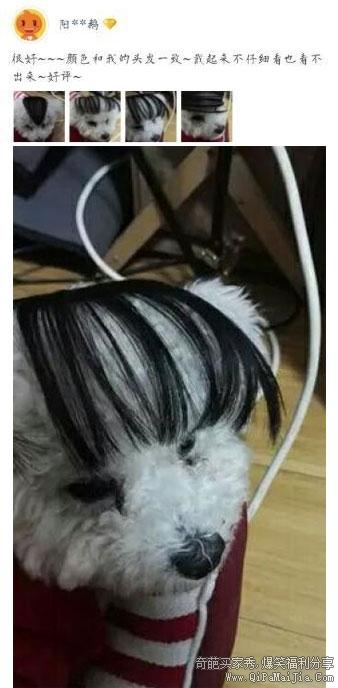 狗子的小刘海还蛮可爱