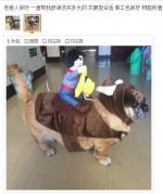 搞笑宠物衣服骑汪星人