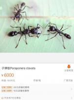 穷就是连只蚂蚁也养不起