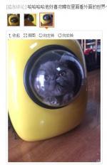 遛猫包带来宇航员般的体验