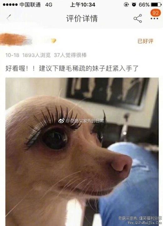 活了几十年,眼睛输给了一条狗。。。